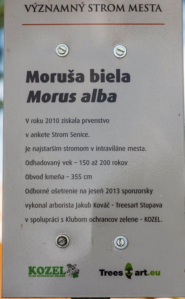 Senická Moruša cedula