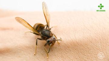 Zabodnutý hmyz