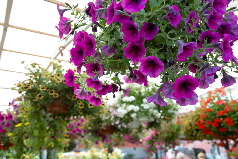 Senica-Plus-Zahradne-centrum-Bena2