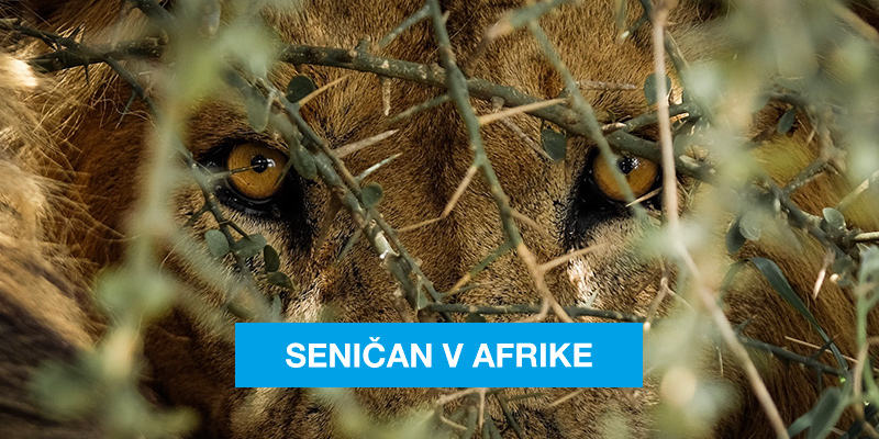 Senicania na výlete v Afrike